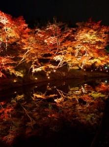京都・東山高台寺・秋の夜間特別拝観